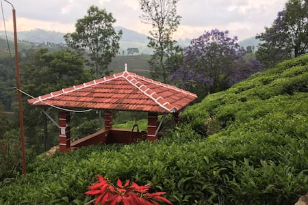 Fuschia Kotagiri, 700 Reviews and counting Cabin 4