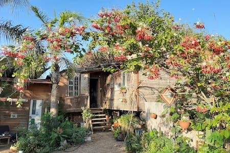 The dreamy tree house