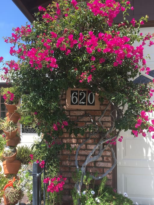 Look for the house number framed in bougainvillea