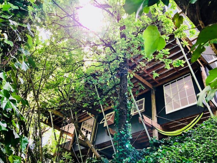 INUK tree nest