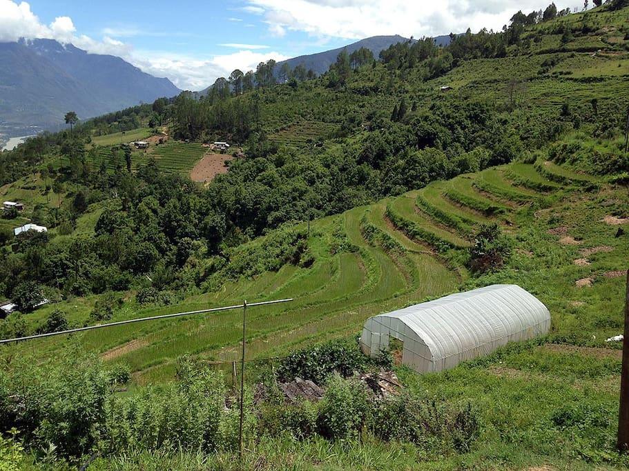 the farm view