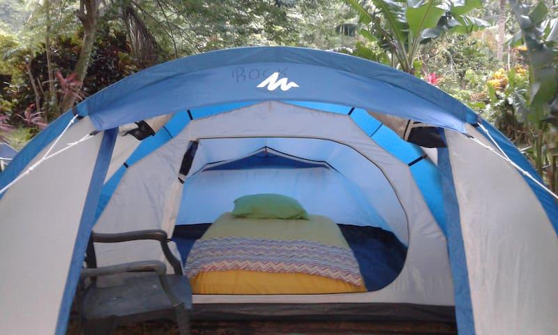 "Big banana campground ""Rock"" - Soufriere - Telt"