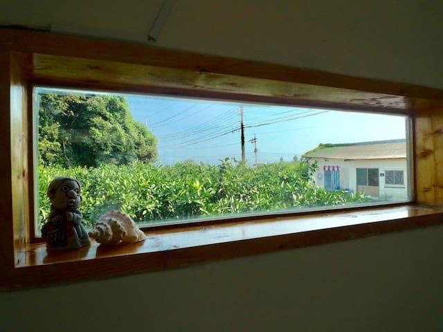 귤나무가 민박집 주위로 있는 아늑하고 조용한 벽화마을민박집입니다.