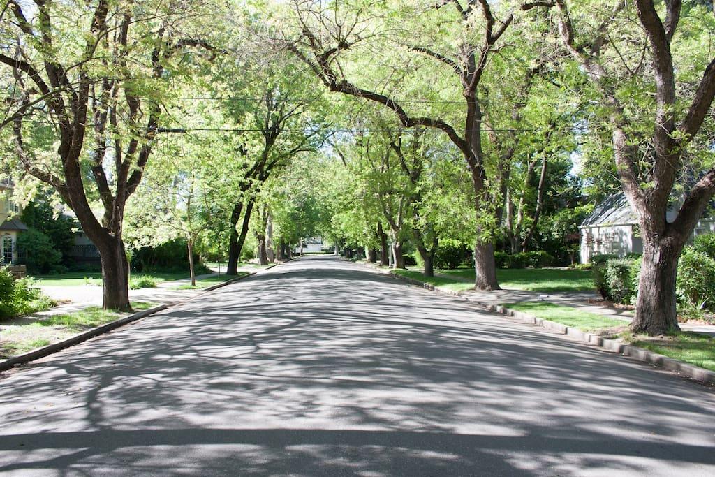 Wonderful Tree Lined Street.  Walk to UCD, farmer's market and downtown