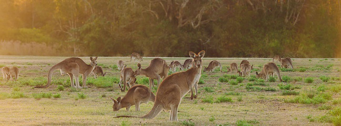 Unique Aussie Camping & Animal Experience - Templestowe