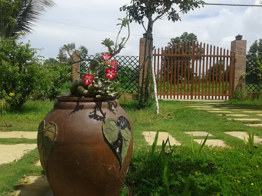 pring Garden Homestay is situated in the green garden with variety of trees and flowers.