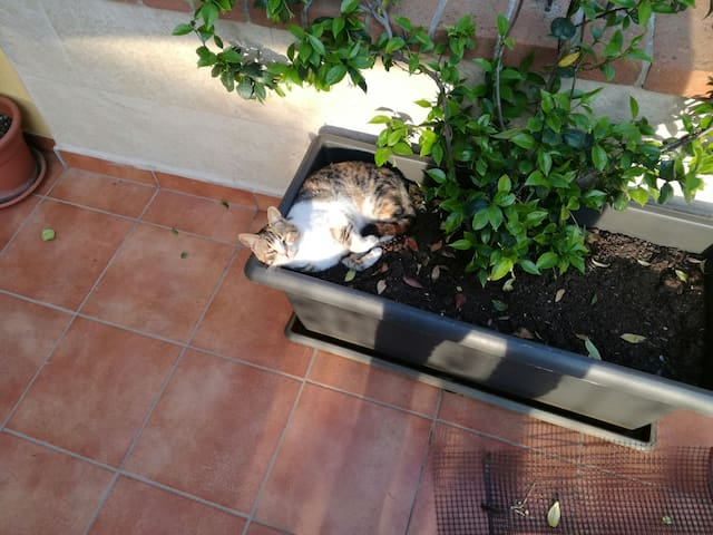 Comoda Casetta con giardino - Frosinone - Hus