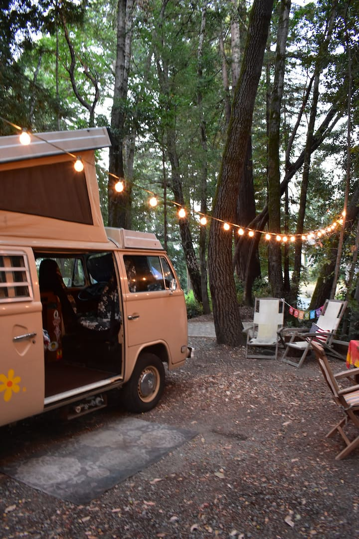 Social distancing in hippy VW Westy in Redwoods