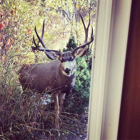 another friendly neighbor