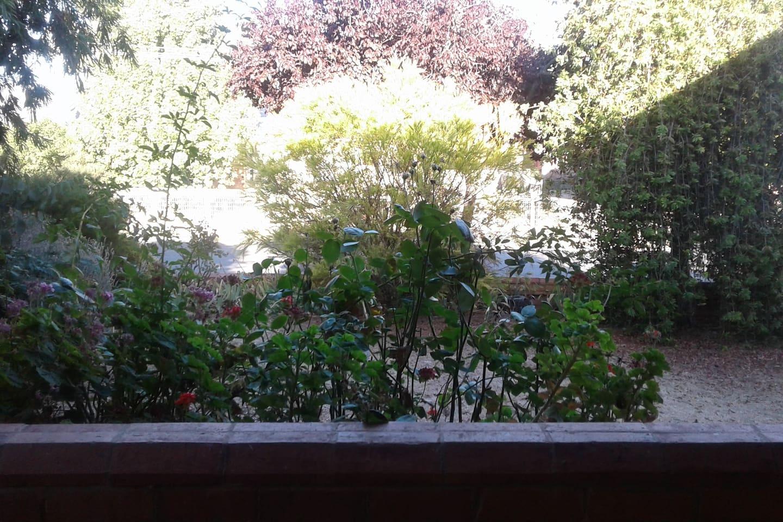 Outlook from the front verandah
