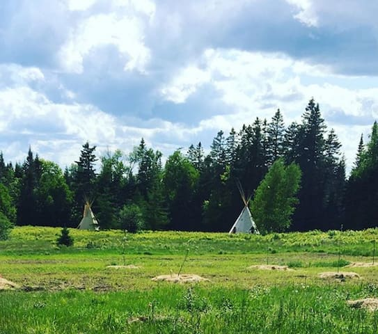 The tipis sit below the fruit and nut tree orchard, just planted this spring. All organic!