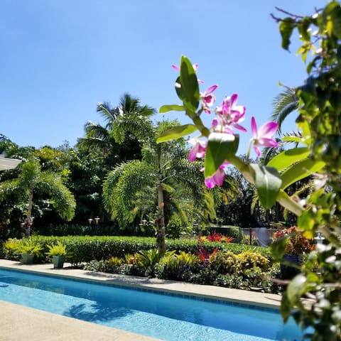 El Parayso Pet Friendly Tranquil Tropical Oasis