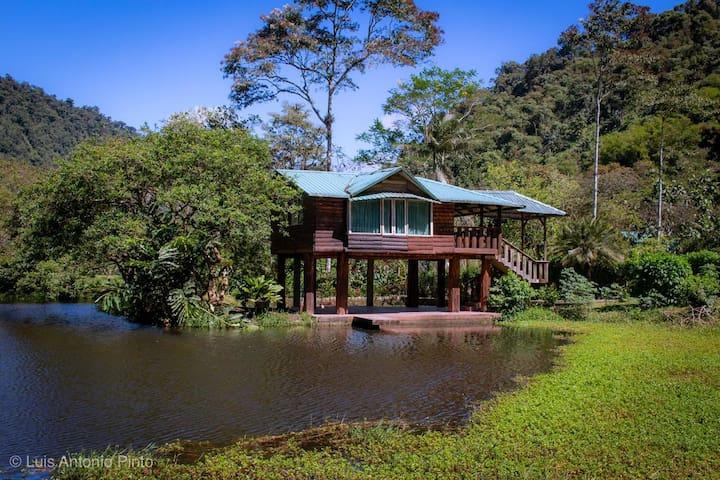 Hermosa y acogedora cabaña en el bosque húmedo