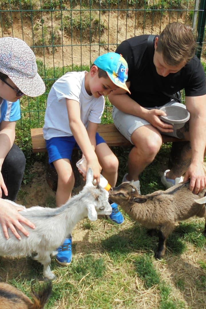 Atelier Nourrissage des chèvres