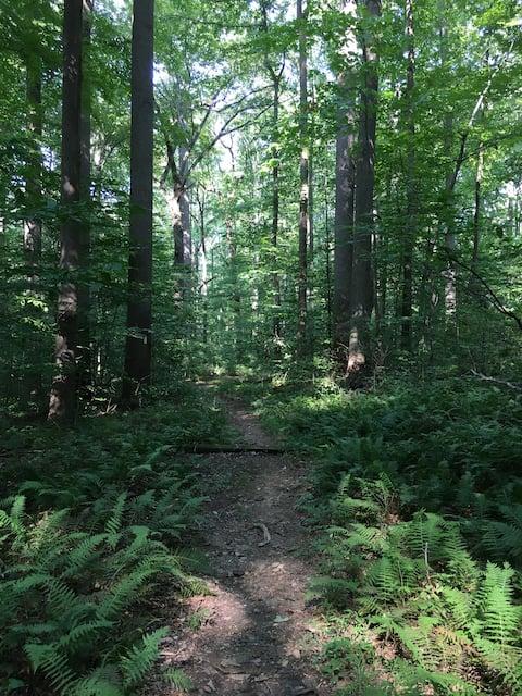 Het gastvrije bos