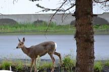 in town wildlife