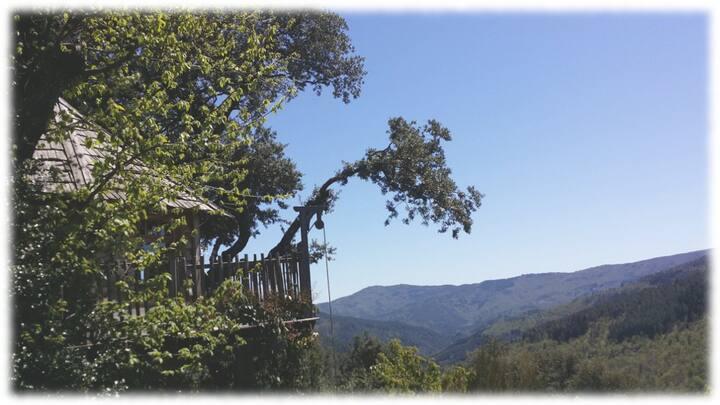 Cabane dans les arbres en Cévennes