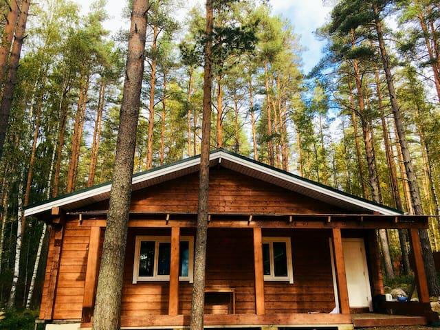 Дом в сосновом лесу.