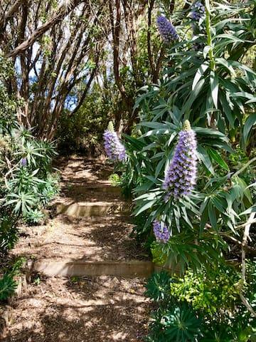 Entrance via garden from driveway