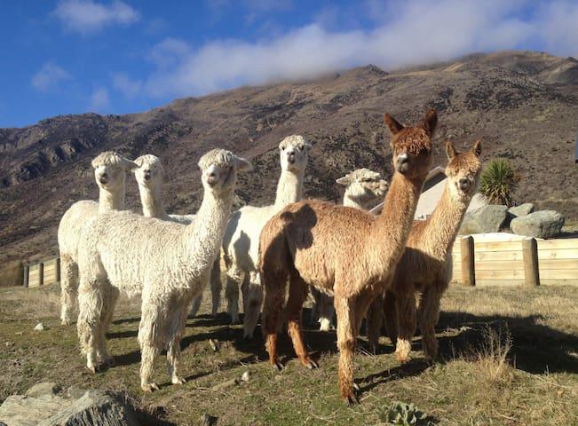 Paqocha Alpaca Luxury Cottage
