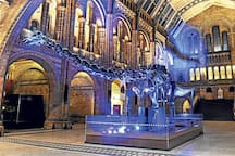 The Natural History Museum in South Kensington: 26 minutes by metro from Aldgate East