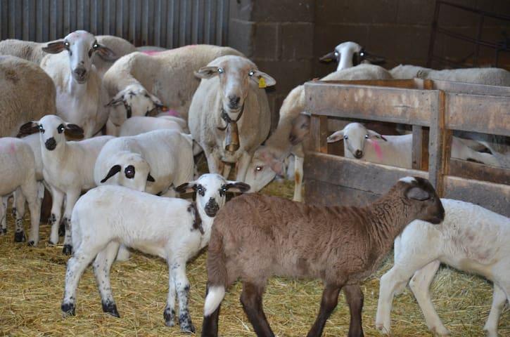 Las ovejas del valle