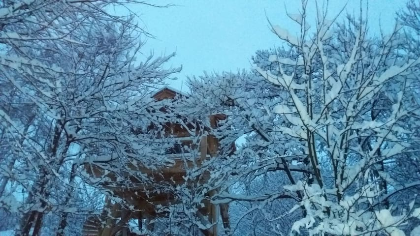 La Quiete- casa sull'albero la betulla