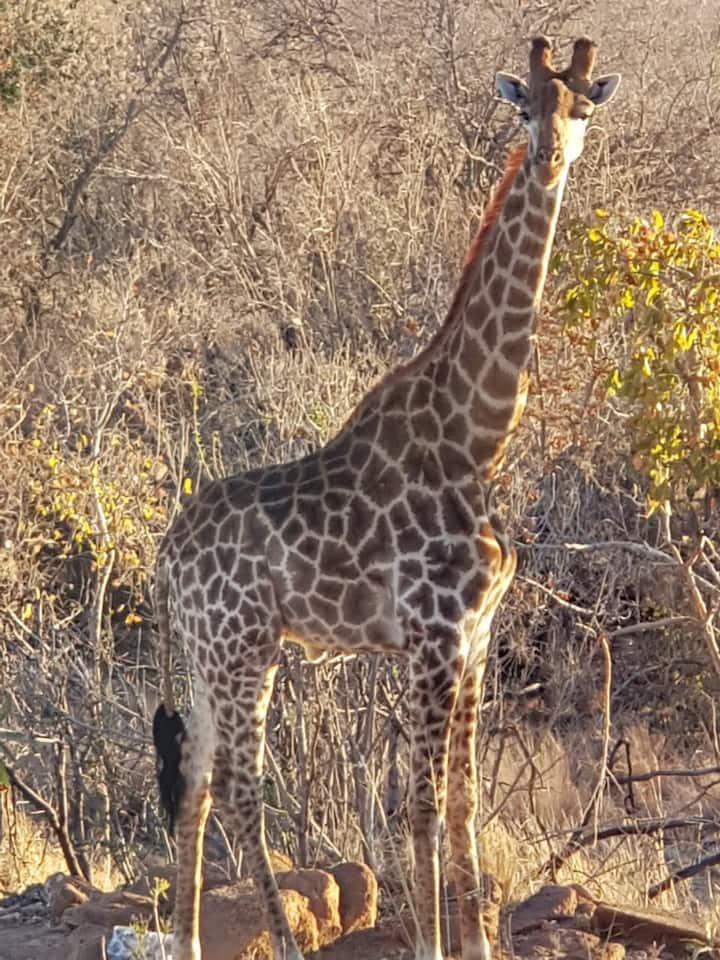 Lodge Twentyfour, Mabalingwe Nature Reserve