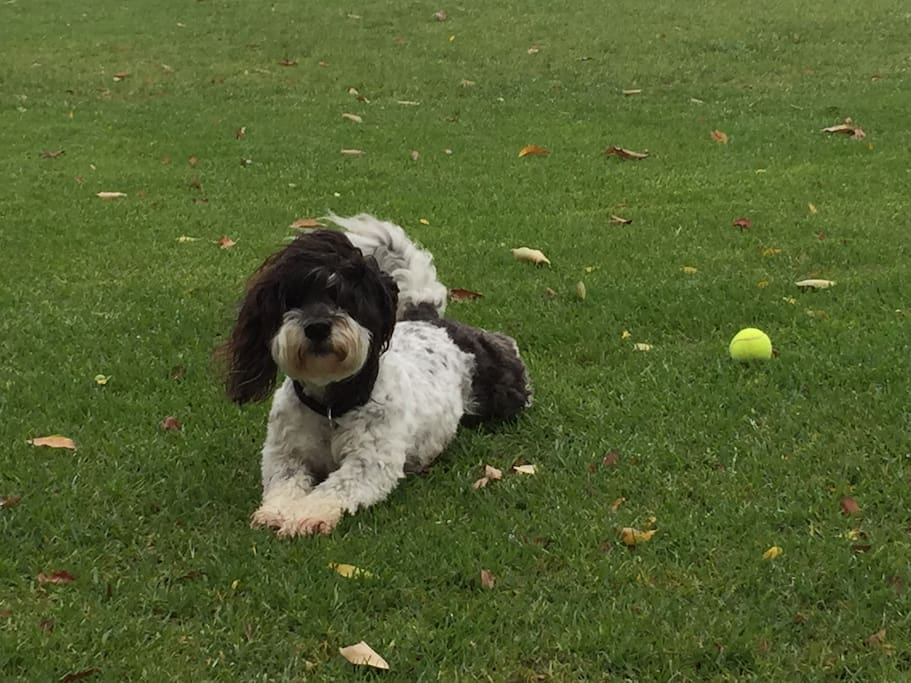 Rico, my dog, enjoying life on the lawn.