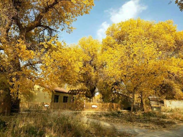 胡杨林下的农家小院两室一厅