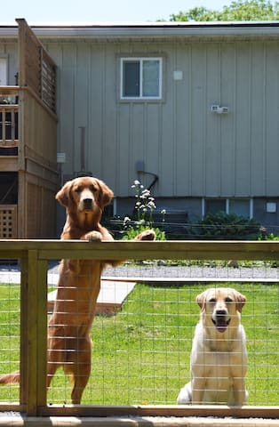 Lily & Maggie, the two pups on the property