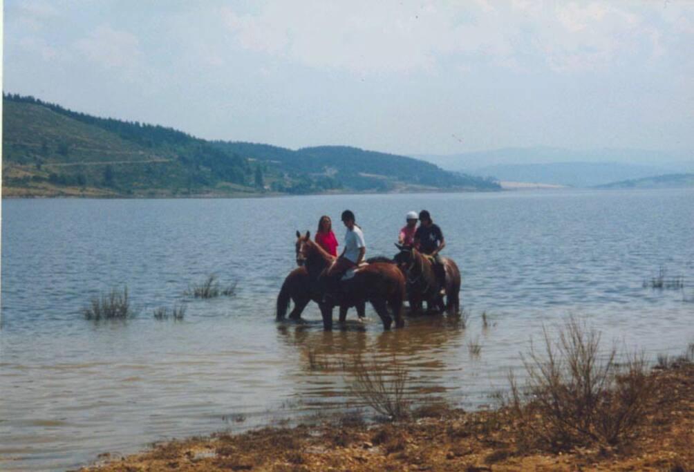 Balade à cheval au lac de Naussac