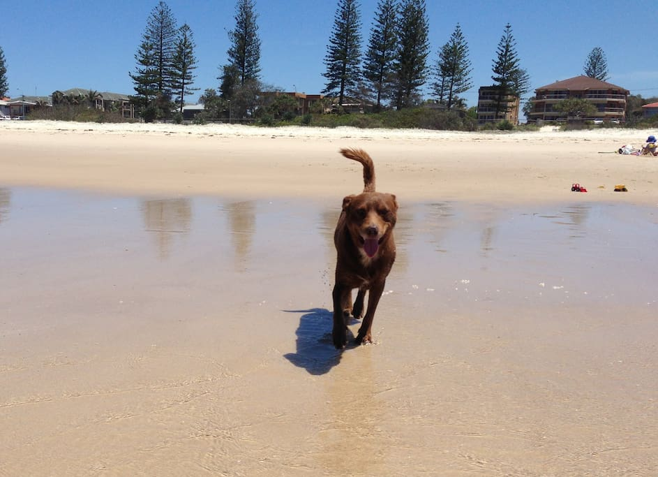 Bilinga Beach - dog friendly