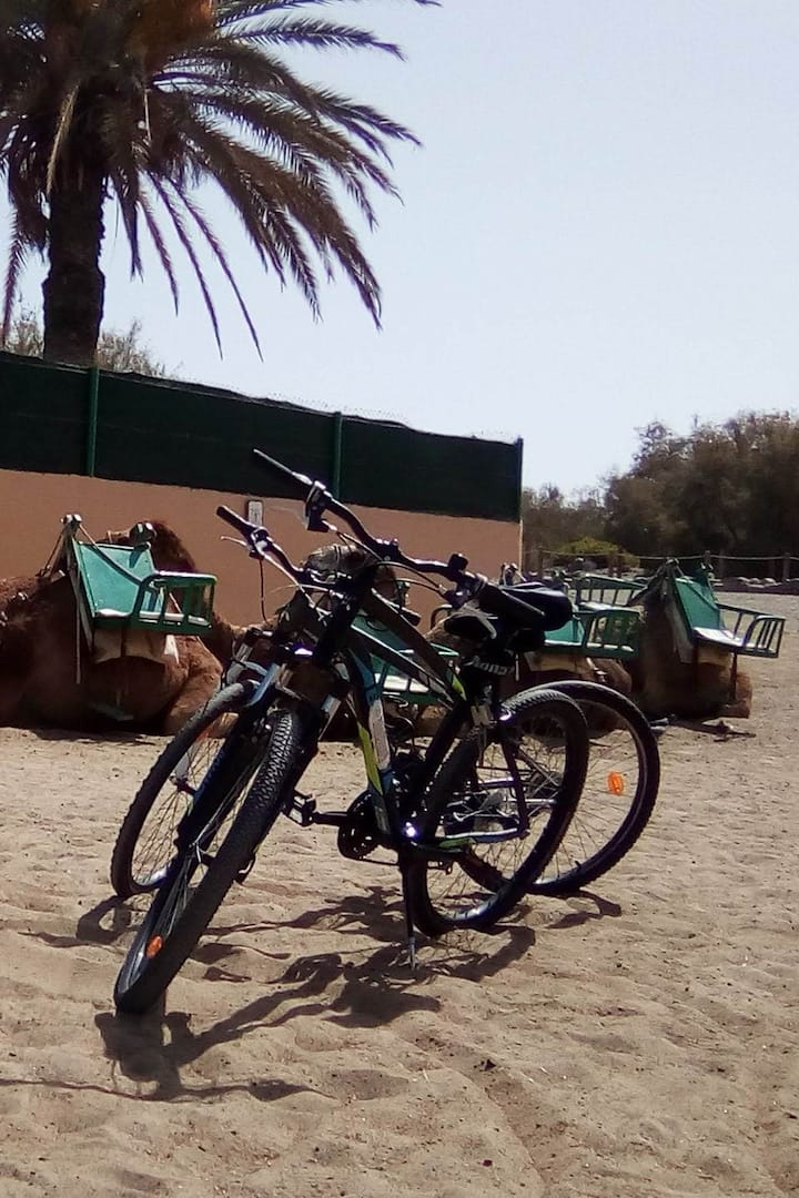Camel & Bike Tour