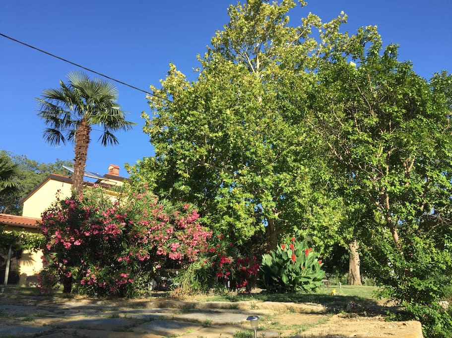 The House is surrounded by flower trees, fruit trees, olive-yards and vineyards