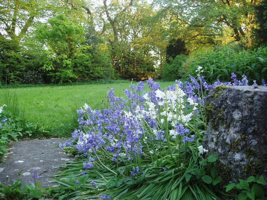 Extensive Grounds and beautiful flowers.