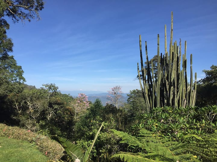 Rest and work in a tropical garden near Bogota