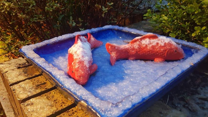 Snow on garden ornamental fish