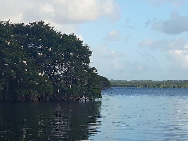 L'île aux oiseaux  accessible en canot, au départ du canal des Rotours ou du port de Vieux Bourg