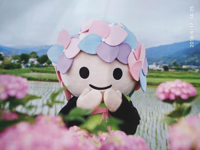箱根民宿紫陽花Purple sun flower in Hakone