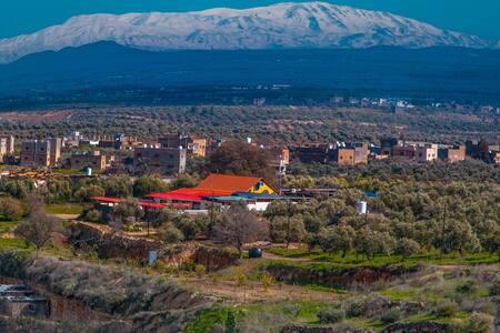 Al rass resort  between the olive,oak trees