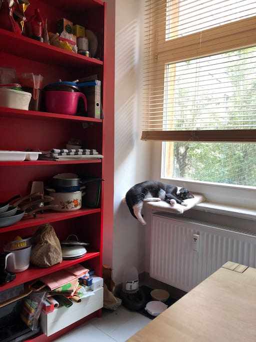 The kitchen corner with the cat Milo