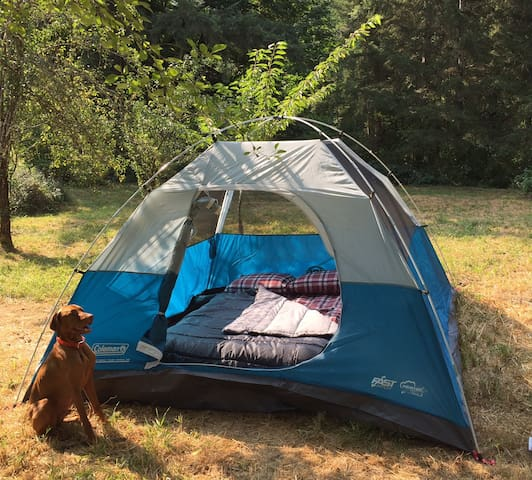 Total Eclipse Large Tent for 4 With Beds