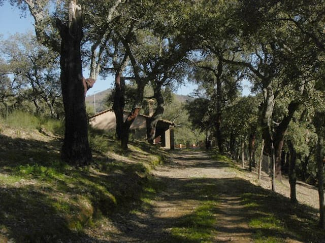 Finca El Pozuelo. En Sierra de Aracena.