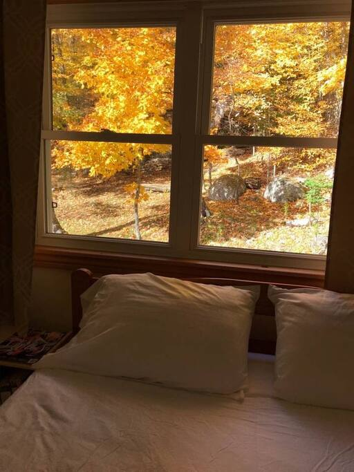 Wake up with your head in Fall colours