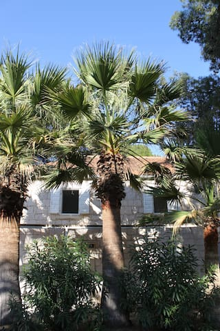 Palms in front of the house