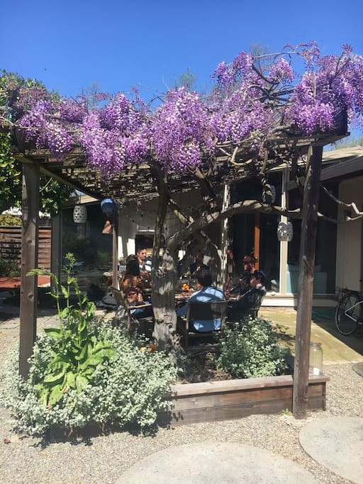 Wisteria in bloom covers the outdoor eating area.