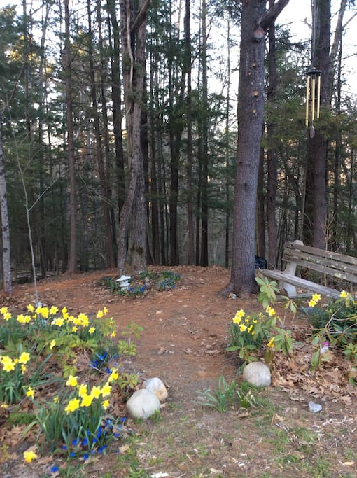 This project is my passion.  I have been creating a woodland garden filled with rhododendrons, mountain laurel, native shrubs & wildflowers, and paths for wandering.  Every month it's different  and more delightful.
