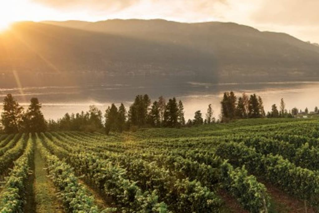 Over 200 Wineries in the region to choose from