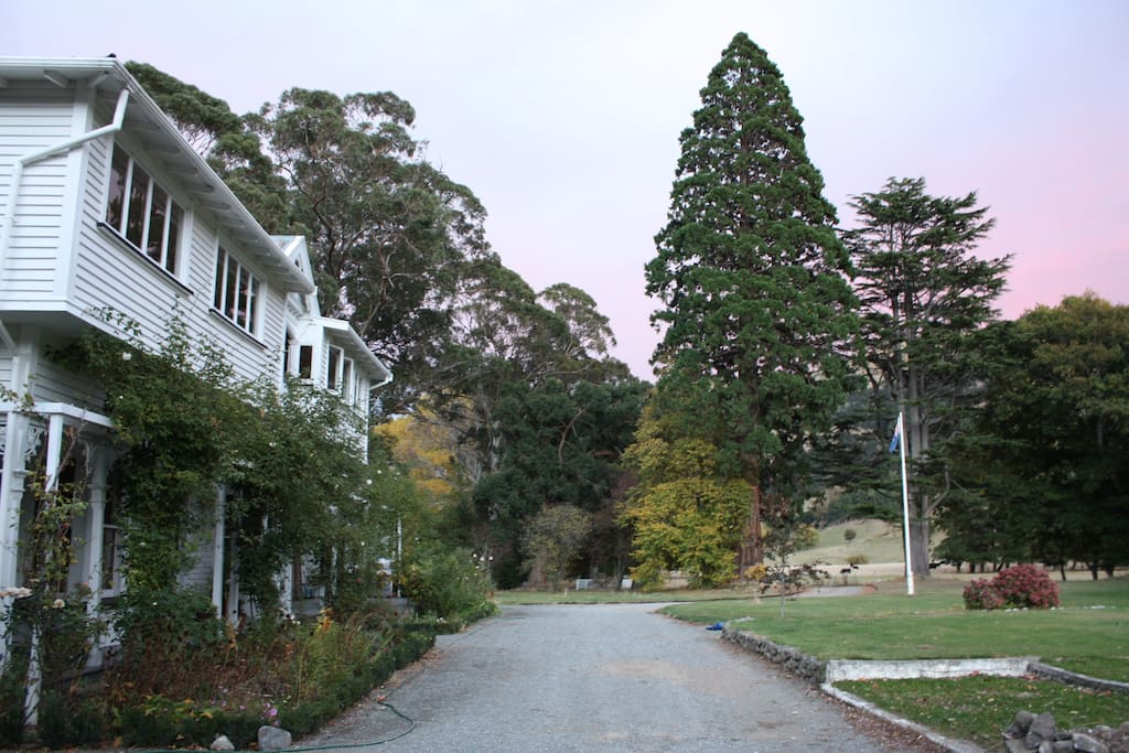 100+ years of established trees